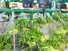 超市蔬菜保鲜喷雾加湿报价