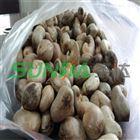 新疆腰果微波熟化设备干果烘培设备