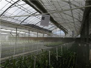 深圳大棚养殖喷雾加湿