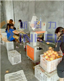 赣南精品脐橙包装机团购