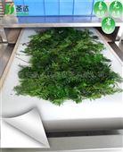 隧道式红豆杉微波干燥设备茶叶干燥机