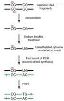 全基因组甲基化测序技术(WGBS)