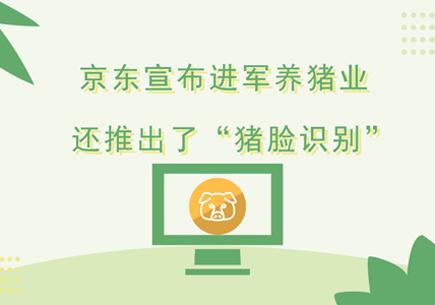 """京东宣布进军养猪业 还推出了""""猪脸识别"""""""
